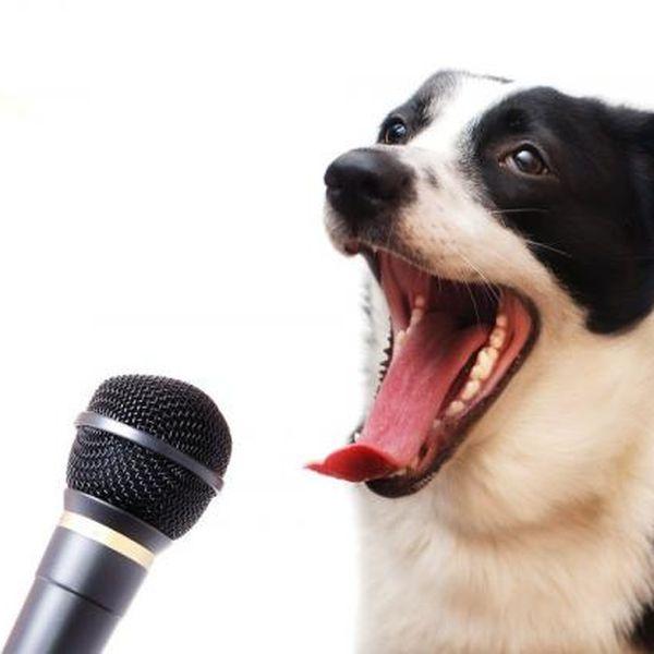 Imagem principal do produto Maestría En Lenguaje Canino