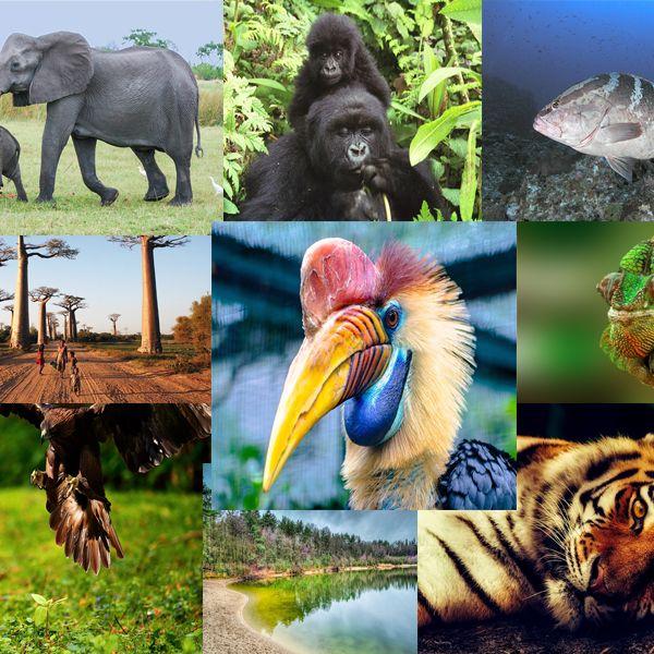 Imagem principal do produto DIVERSIDAD ANIMAL