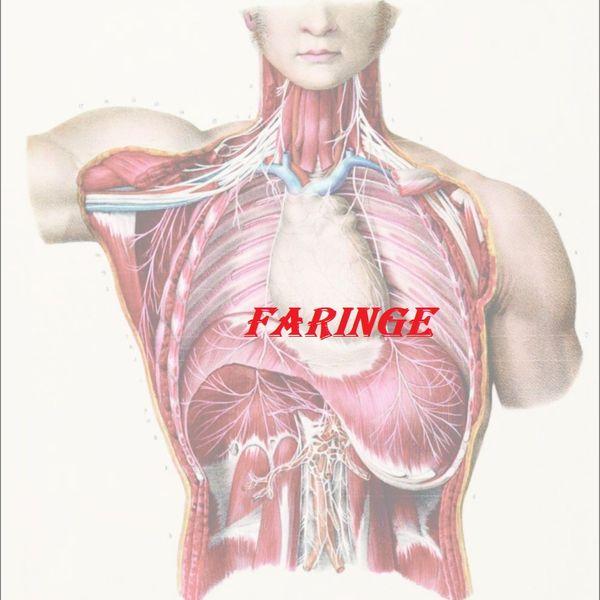 Imagem principal do produto Anatomia Humana Faringe