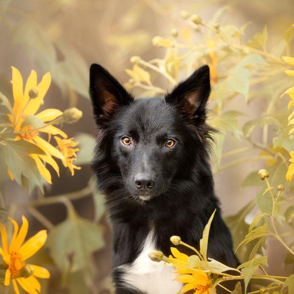 Imagem principal do produto Cães no Photoshop e prática da fotografia