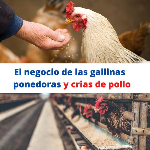 Imagem principal do produto el negocio de las crías de pollo y gallinas ponedoras