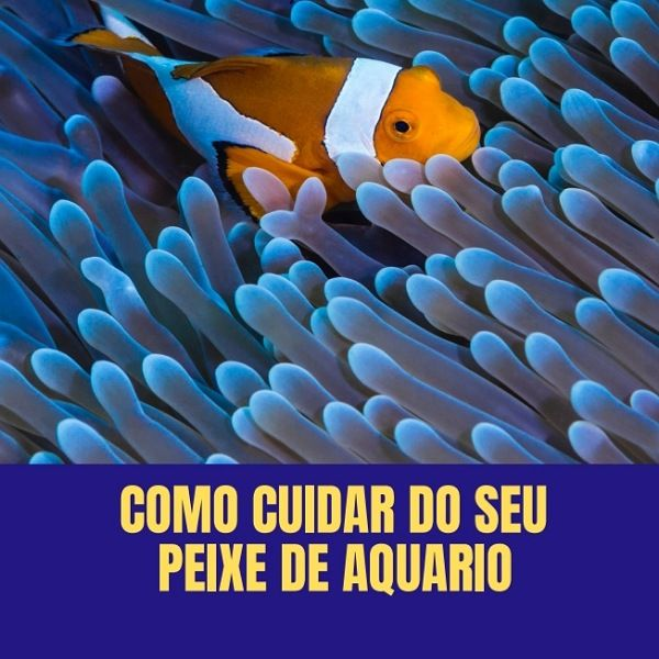 Imagem principal do produto COMO CUIDAR DO SEU PEIXE DE AQUÁRIO