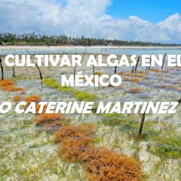 Imagem principal do produto GUÍA PARA CULTIVAR ALGAS EN EL GOLFO DE MÉXICO