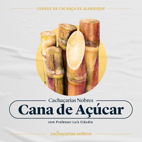 Imagem principal do produto Curso de Cana de Açúcar - Cachaçarias Nobres