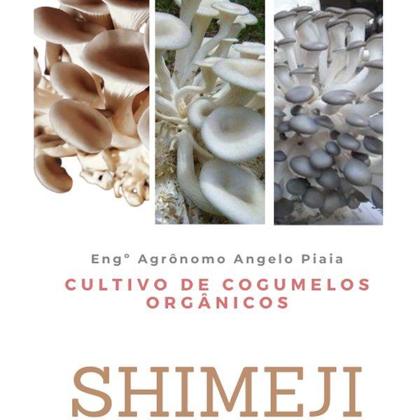 Imagem principal do produto Colheita de Shimeji Orgânicos em 45 dias - passo a passo