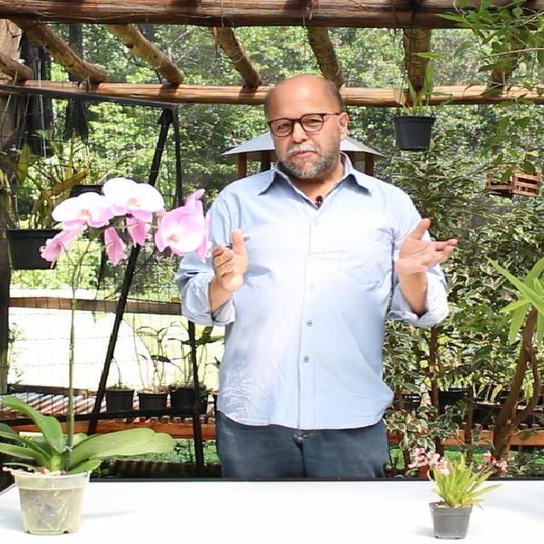 orquídeas video + manual