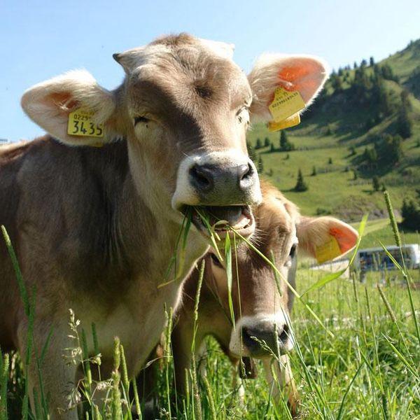 Imagem principal do produto Inseminación, Reproducción y Genética de Animales Vacunos