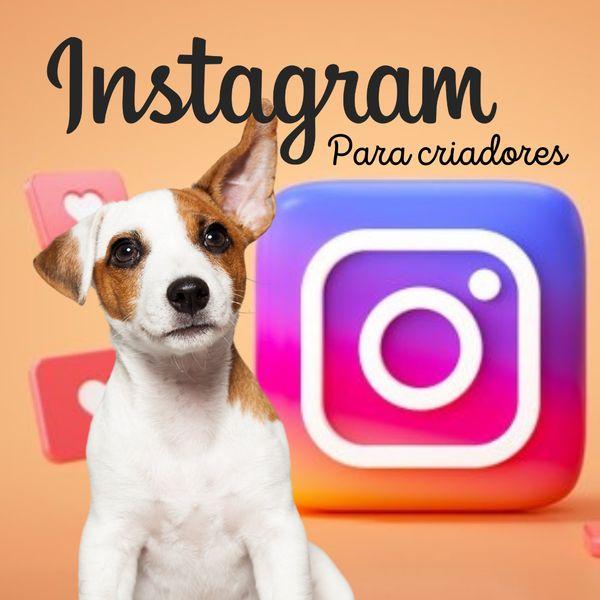 Imagem principal do produto Instagram para criadores de cães