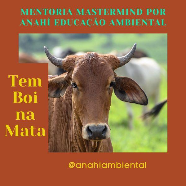 Imagem principal do produto Mentoria Tem Boi na Mata!