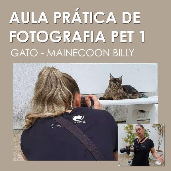 Imagem principal do produto Aula Prática de Fotografia Pet - Ensaio Externo - Gato Main Coon Billy