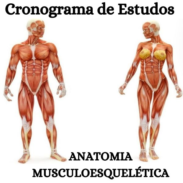 Imagem principal do produto Cronograma de Estudos de Anatomia Musculoesquelética