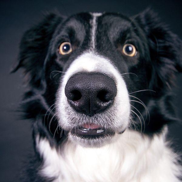 Imagem principal do produto Comunidade VIP dos Amantes de Cães