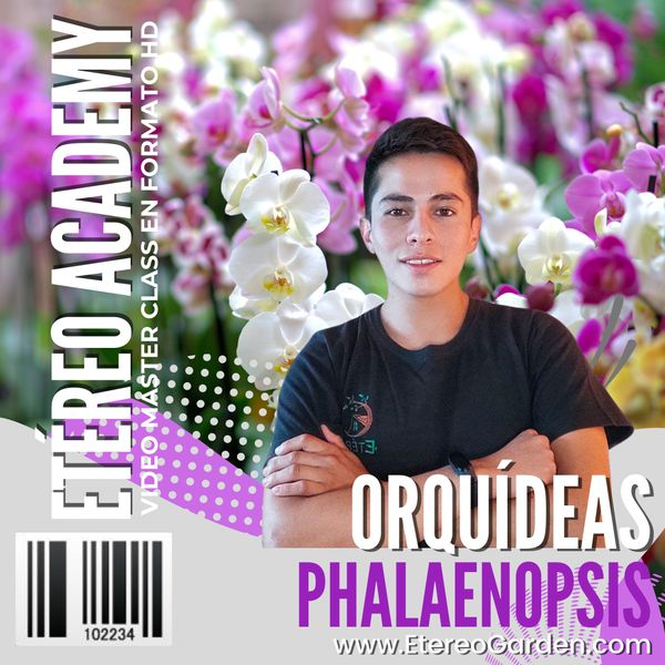 Imagem principal do produto Cultivo de Orquídeas Phalaenopsis