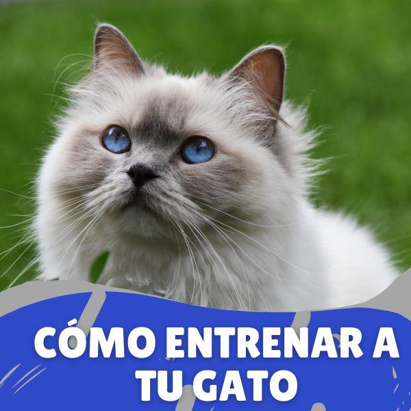 Imagem principal do produto Cómo Entrenar a tu gato