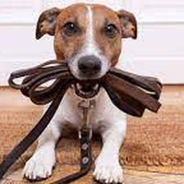 Imagem principal do produto Crie sua renda - Adestramento de Pets