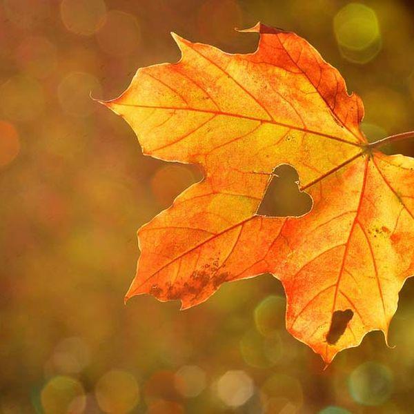 Imagem principal do produto E-books de Outono pelo Ayurveda