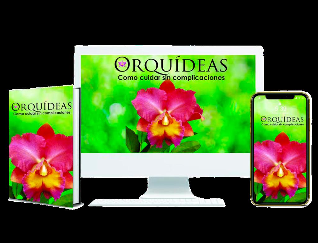 Orquídeas como cuidad sin complicaciones