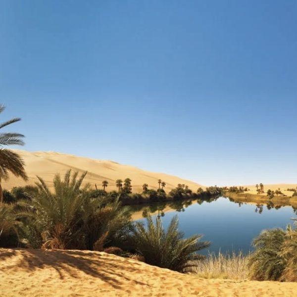 Imagem principal do produto Do Deserto ao seu Oásis.