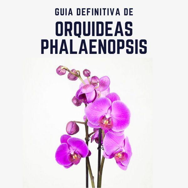 Imagem principal do produto Guía Definitiva de Orquídeas Phalaenopsis