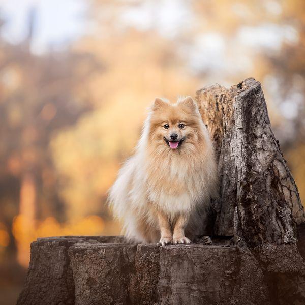 Imagem principal do produto Cães no Lightroom + Photoshop + prática (combo)