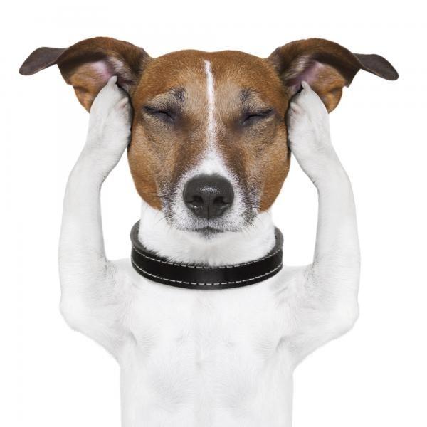 Imagem principal do produto La Clínica del Dolor en Animales