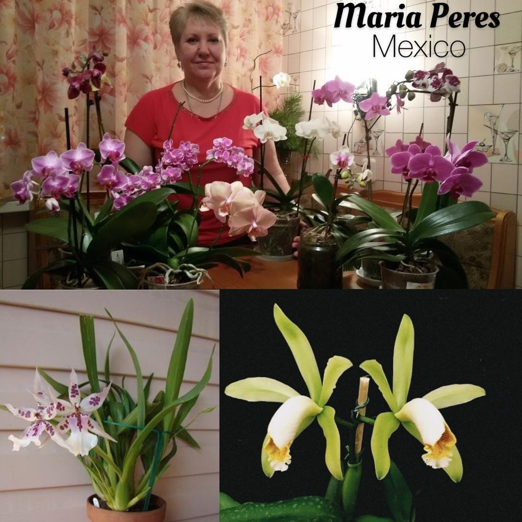 Maria Peres