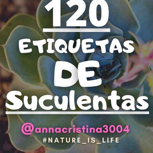 Imagem principal do produto 120 Etiquetas de SUCULENTAS