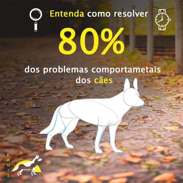 Imagem principal do produto Consultoria  comportamental do  zero ao cão ideal