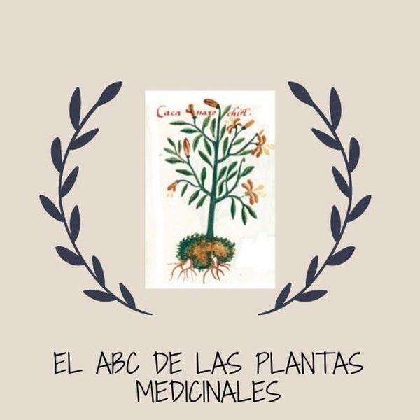 Imagem principal do produto El abc de las plantas y la medicina tradicinal mexicana