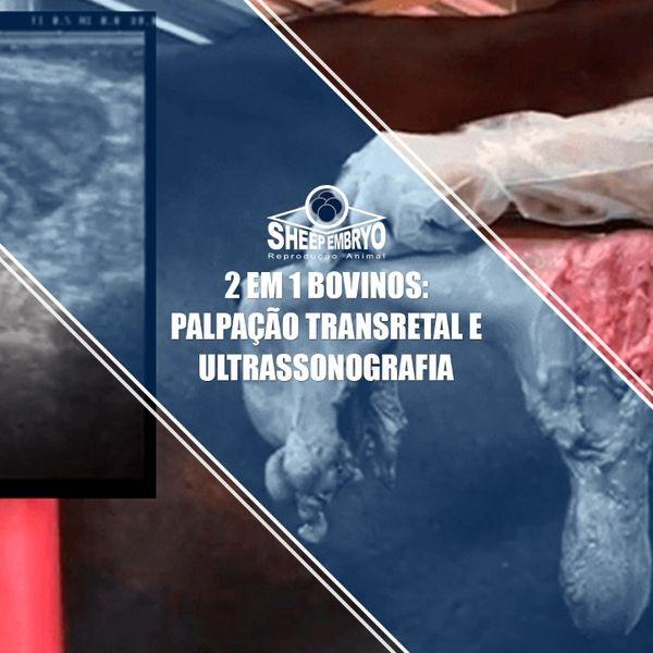 Imagem principal do produto 2 EM 1 BOVINOS: PALPAÇÃO TRANSRETAL E ULTRASSONOGRAFIA