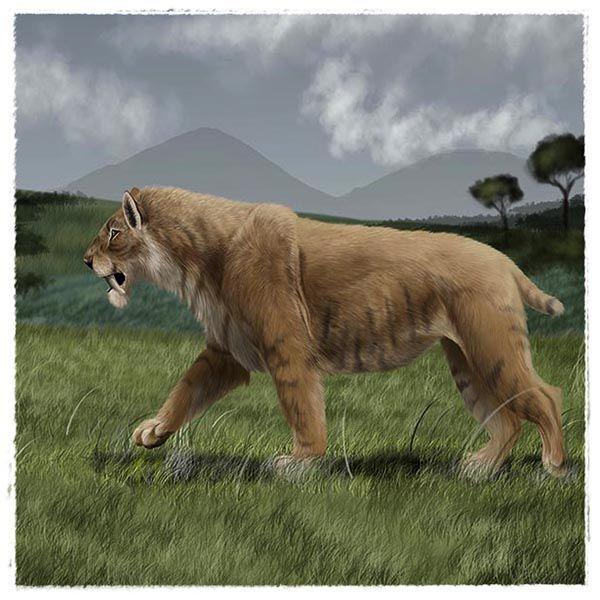 Imagem principal do produto Ilustração científica