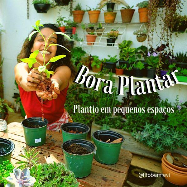Imagem principal do produto Bora Plantar-plantio em pequenos espaços