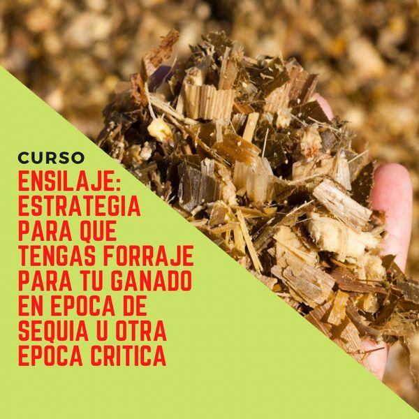 Imagem principal do produto El ensilaje; estrategia para tengas forraje para tu ganado en la época de sequia u otra época critica