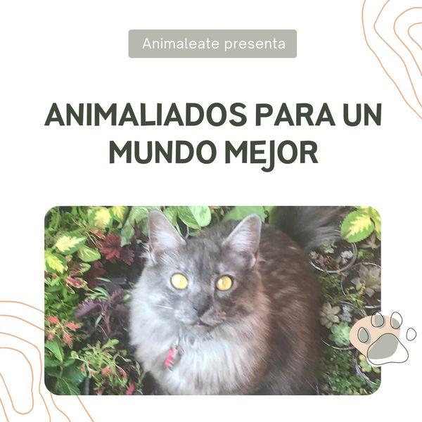 Imagem principal do produto Animaliados para un mundo mejor