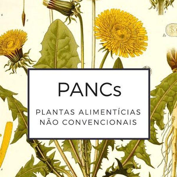 Imagem principal do produto Horta Vertical e Hortaliças PANC's