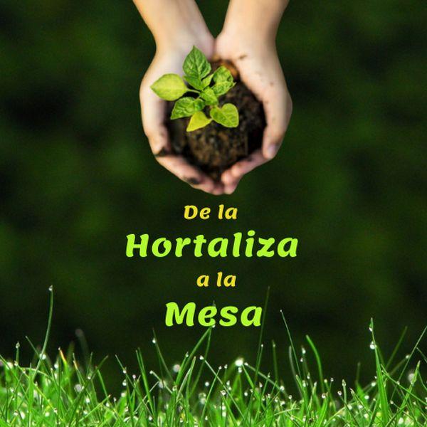 Imagem principal do produto De la HORTALIZA a la MESA
