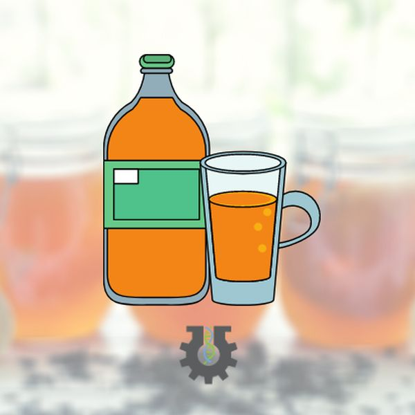 Imagem principal do produto Bebidas fermentadas fáceis e saudáveis de fazer em casa!