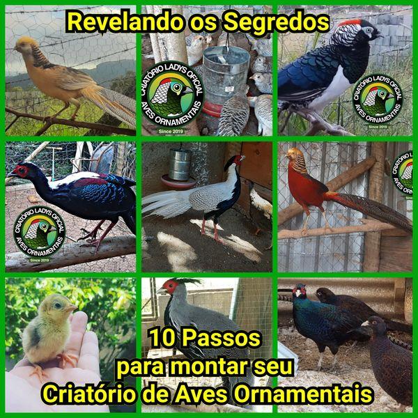 Imagem principal do produto 10 Passos para Montar seu Criatório de Aves Ornamentais