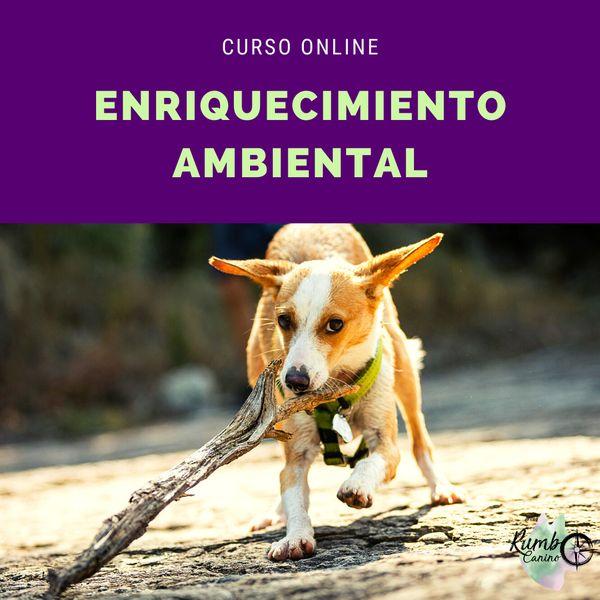 Imagem principal do produto Curso de Enriquecimiento Ambiental