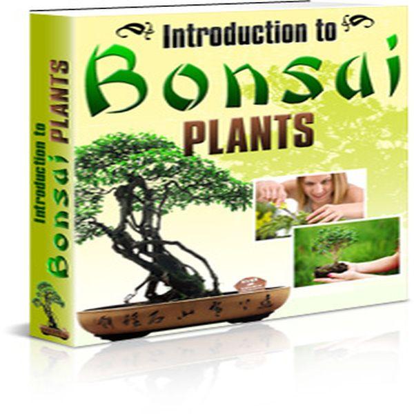 Imagem principal do produto Introduction To Bonsai
