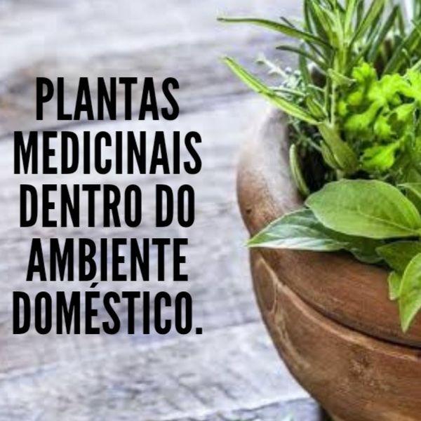 Imagem principal do produto Importância das plantas medicinais dentro do ambiente doméstico.