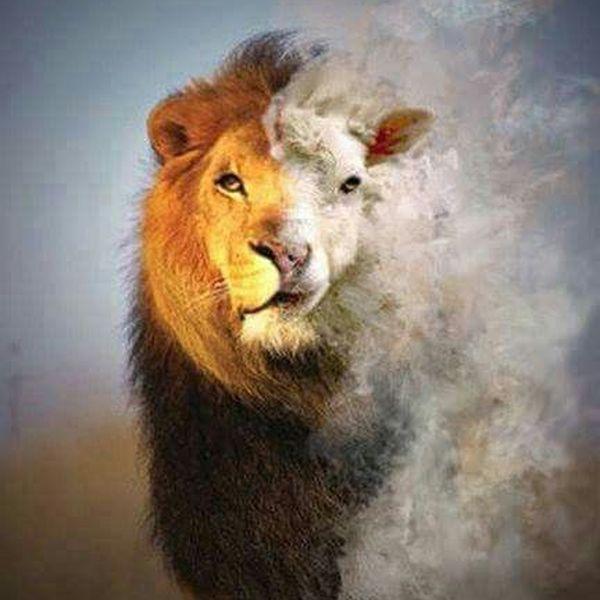 Imagem principal do produto Do Cordeiro Ao Leão
