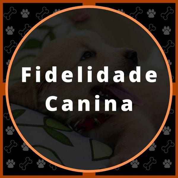 Imagem principal do produto Fidelidade Canina