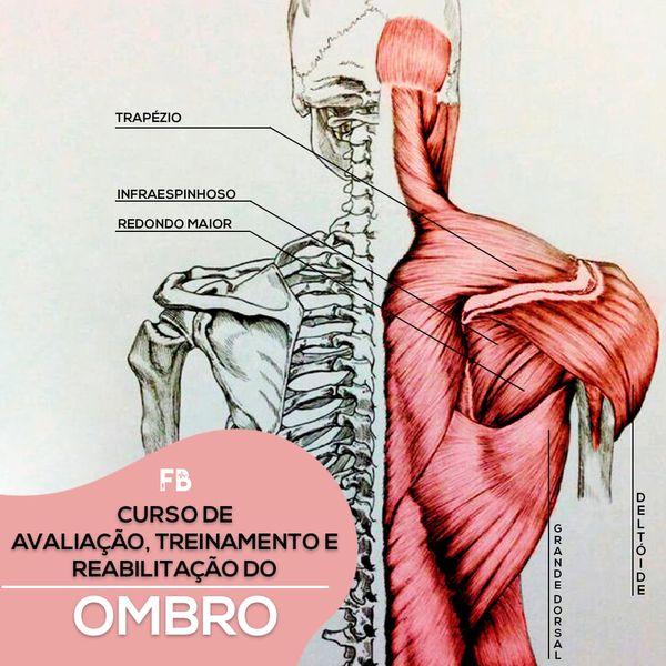 Imagem principal do produto Curso de avaliação, treinamento e reabilitação do ombro.