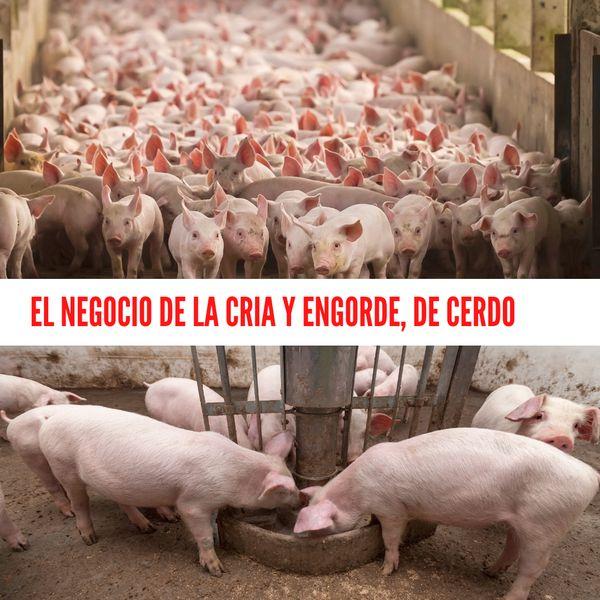 Imagem principal do produto El negocio de la cria y engorde de cerdos