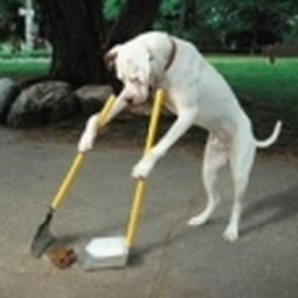 Imagem principal do produto Adestramento de cães em casa