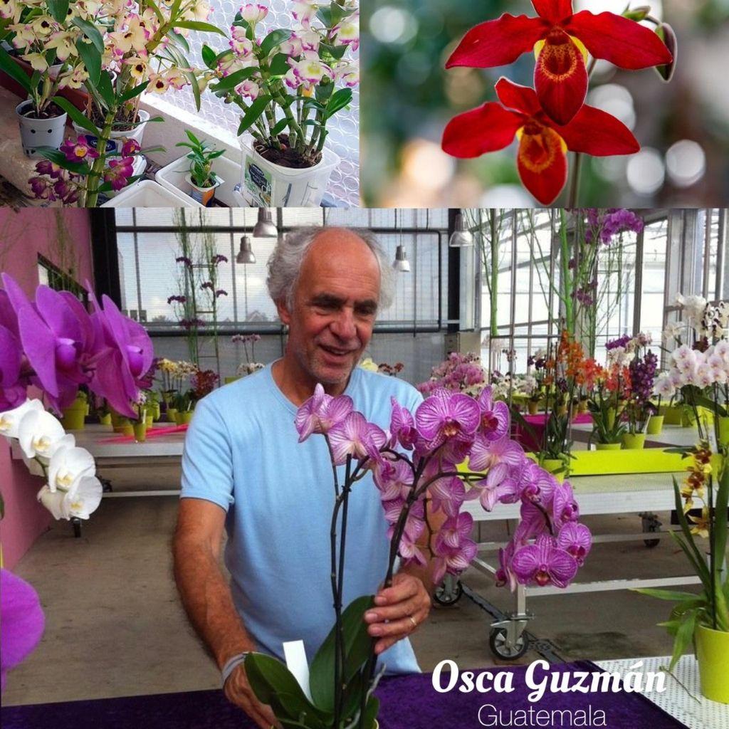 Osca Guzmán
