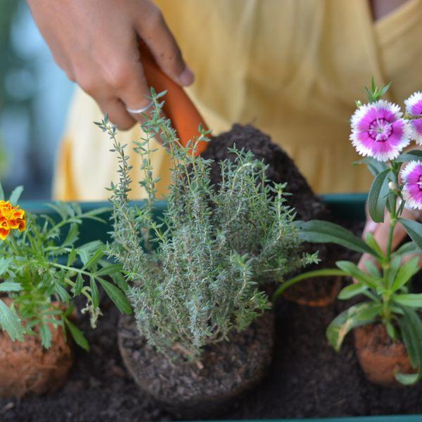 Imagem principal do produto Curso Planta e Cozinha