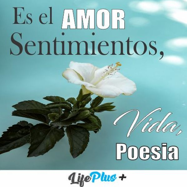Imagem principal do produto Es el amor...  Sentimientos, vida, poesía