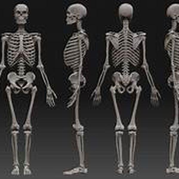 """Imagem principal do produto Anatomia Humana  """"Ossos"""""""